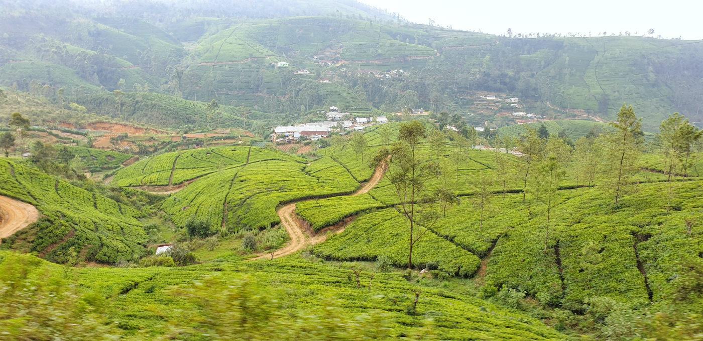 plantaciones-de-te-de-kandy-a-ella