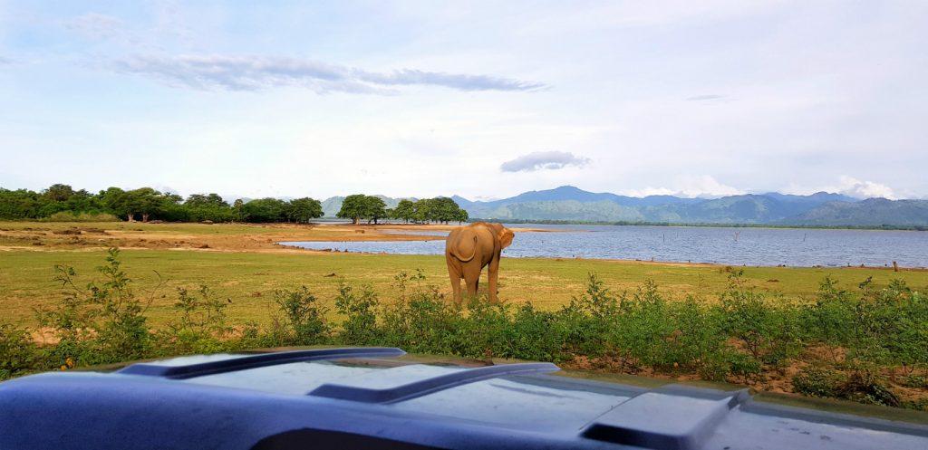 safari-udawalawe-sri-lanka